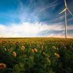 sunflowers-1853323_1920